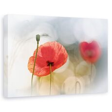 Tablou canvas - Dimineata cu maci, Flori, Rosu, Romantic, fig. 1