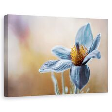 Tablou canvas - Flori albastra, Flori, fig. 1