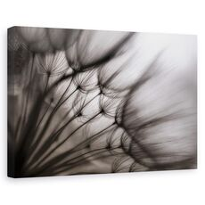 Tablou canvas - Flori, Abstracte, Atmosfera, Bland, fig. 1