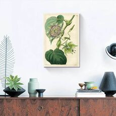 Tablou Canvas - Antique Passionflower I, fig. 1