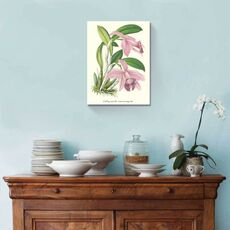 Tablou Canvas - Lavender Orchids II, fig. 1