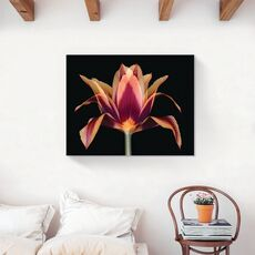 Tablou Canvas - Floare portocaliu, Primavara, fig. 2