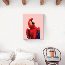 Tablou Canvas - Animal, Pasare, Papagal, Color, fig. 2