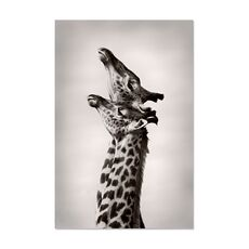 Tablou Canvas -  Girafe, Africa, Pereche, fig. 1
