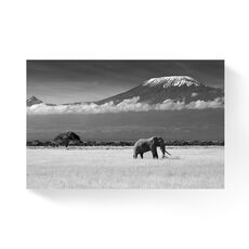 Tablou Canvas -  Elefant, Savana, Munte, Kilimandjaro, fig. 1