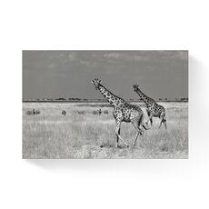 Tablou Canvas -  Girafe, Savana, Africa, Pereche, fig. 1