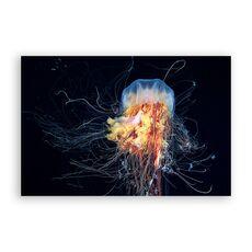 Tablou Canvas -  Meduza, Animal, Mare, fig. 1