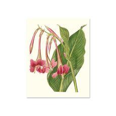 Tablou Canvas - Flori tropicale din India, Frunza, Retro, Verde, Roz, fig. 2
