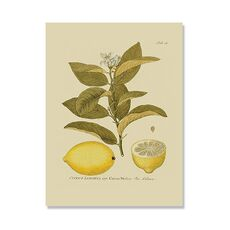 Tablou Canvas - Antique Lemon, fig. 2
