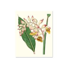 Tablou Canvas - Floare tropicala, Roz, Galben, Verde, Frunza, fig. 2