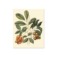 Tablou Canvas - Foliage, Flowers, & Fruit I, fig. 2