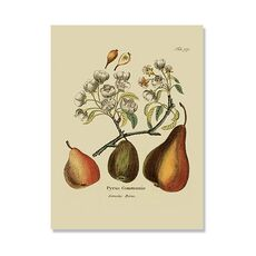 Tablou Canvas - Pere, antic, fructe, Retro, Verde, Maro, Flori, fig. 2
