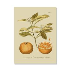Tablou Canvas - Antique Orange, fig. 2