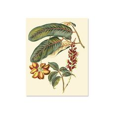 Tablou Canvas - Foliage, Flowers, & Fruit IV, fig. 2