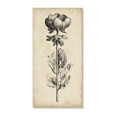 Tablou Canvas - Frumusete unica III, Floare, Alb negru, Retro, Maro, Gri, fig. 2