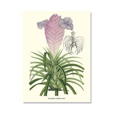 Tablou Canvas - Lavender Orchids III, fig. 2